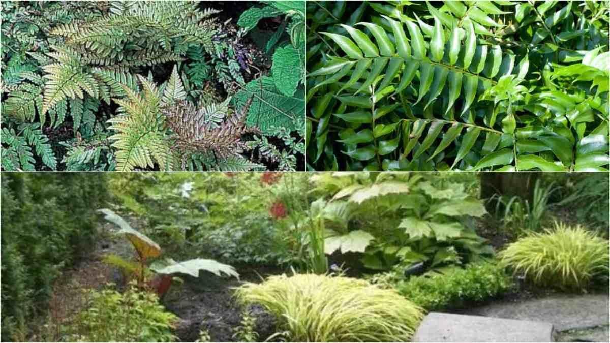 3 specie di felci per un giardino verde e rigoglioso anche - Giardino di inverno ...