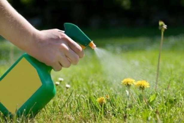 utilizzare l'aceto per eliminare le erbacce