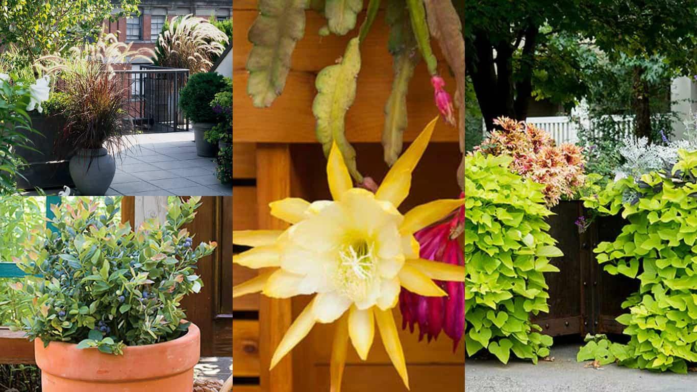 Orchidee Meravigliose Trucchi E Segreti 10 meravigliose piante che si possono coltivare anche in