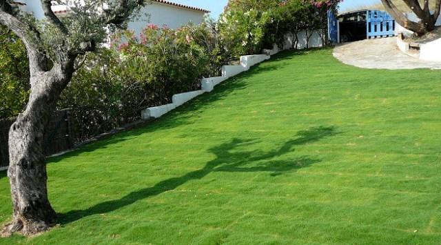 Zoysia tenuifolia il manto erboso che non necessita - Erba da giardino resistente ...