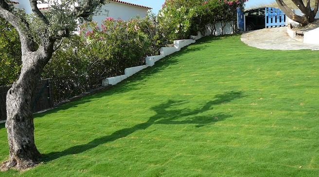 Piante Tappezzanti Calpestabili : Quale erba piantare in giardino
