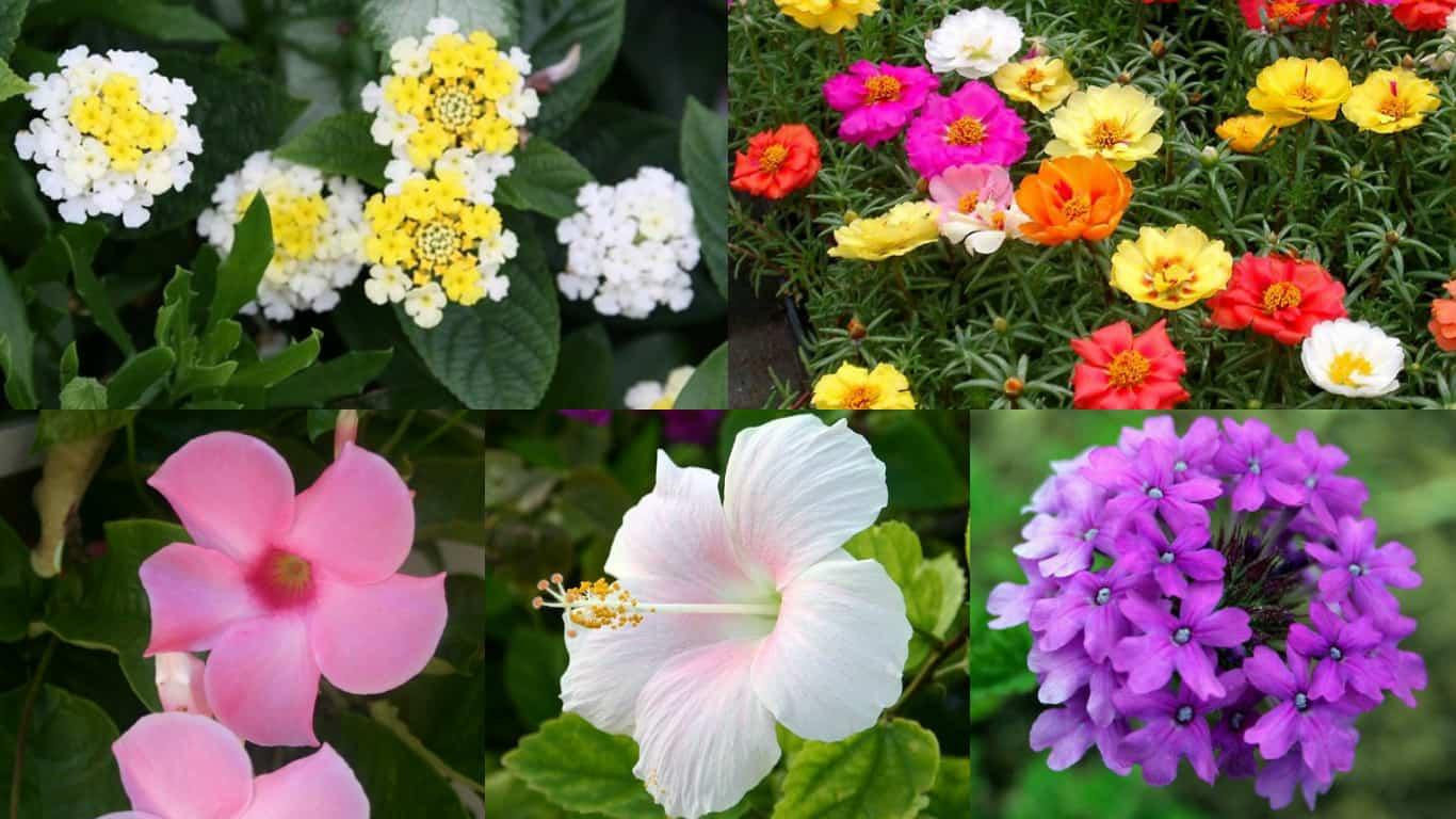 fiori esposti al sole