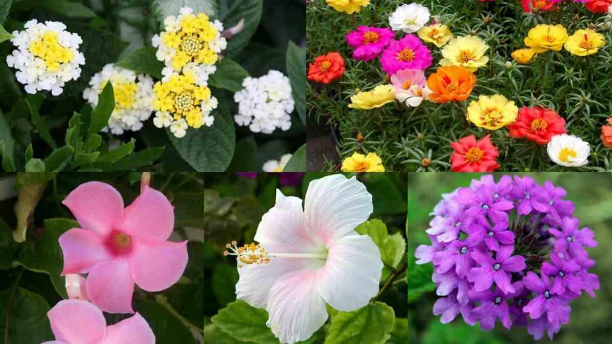 10 magnifici fiori da coltivare in pieno sole guida giardino