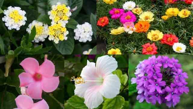 10 magnifici fiori da coltivare in pieno sole guida giardino for Fiori da esterno