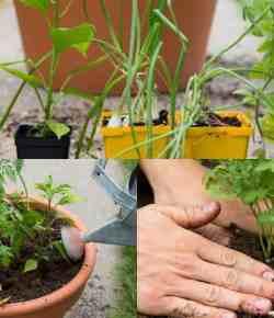 Coltivazioni in vaso: tutto il necessario per sughi e salse in un unico contenitore