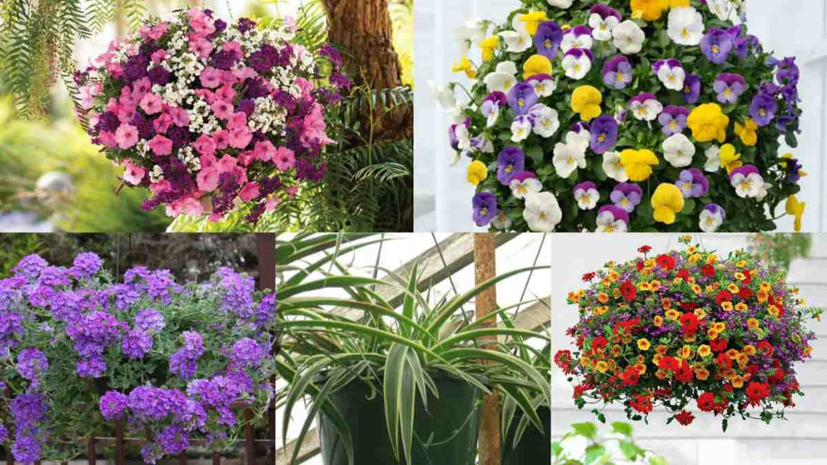 18 piante ideali per la coltivazione in vasi appesi for Piante per esterni resistenti