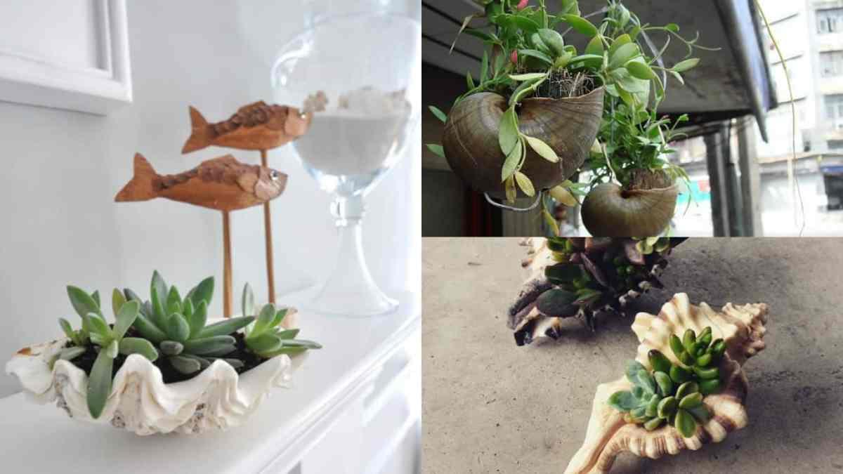 Originali composizioni verdi realizzate con le conchiglie for Oggetti decorativi fai da te