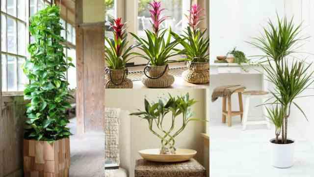 7 piante da interni ideali per giardinieri poco esperti for Piante verdi interno