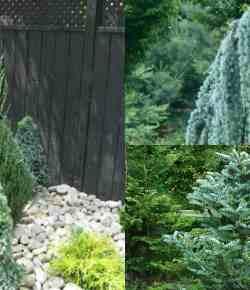 Creare un magnifico paesaggio naturale con le conifere