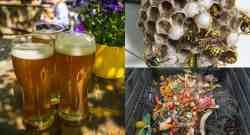7 usi della birra in giardino