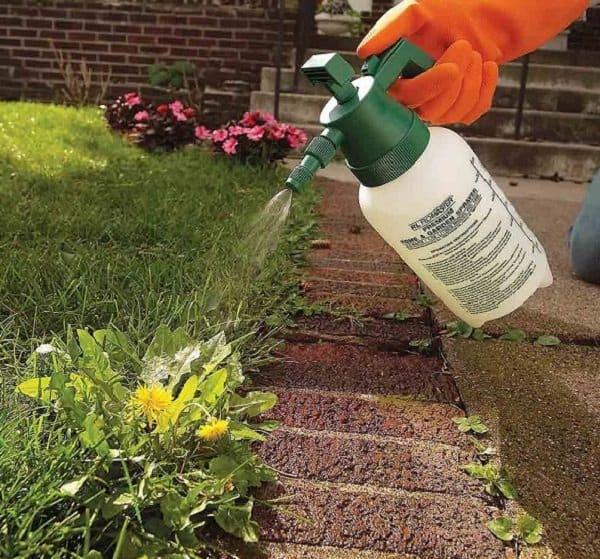 8 soluzioni ecologiche per eliminare le erbacce guida for Soluzioni per dividere giardino