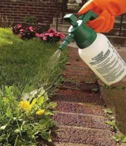 8 soluzioni ecologiche per eliminare le erbacce