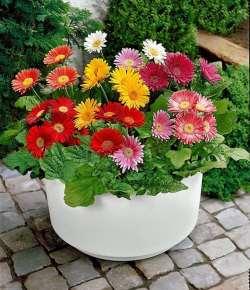 7 piante fiorite da coltivare anche in inverno