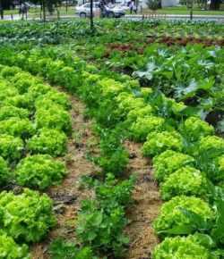 Orto in inverno: 3 suggerimenti per un orto sano e rigoglioso