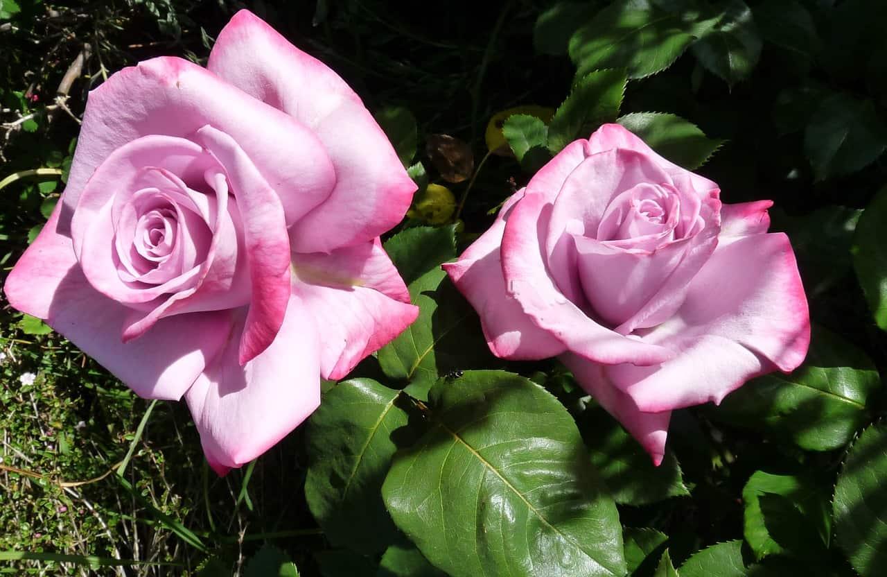 Piante e fiori su balconi terrazzi e giardini con esposizione a