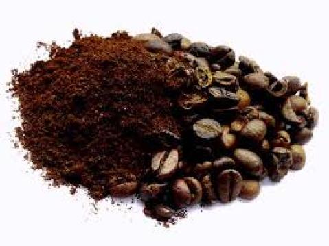 il caffè è considerato un ottimo fertilizzante
