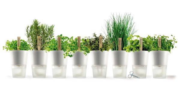 erbe aromatiche, perfette e ideali da coltivare proprio durante la stagione cald