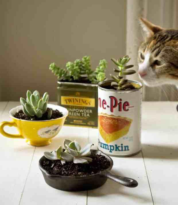 vasi alternativi per le piante grasse