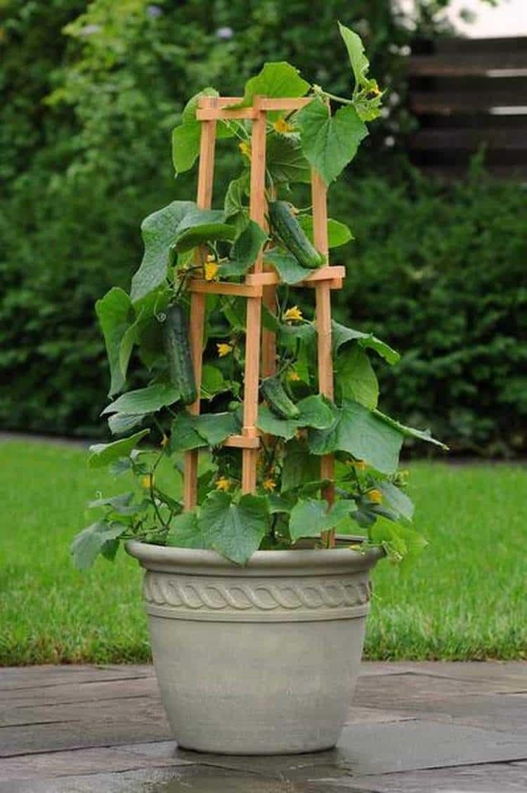 Sostegni Per Pomodori In Vaso 11 ortaggi da coltivare in vaso - guida giardino