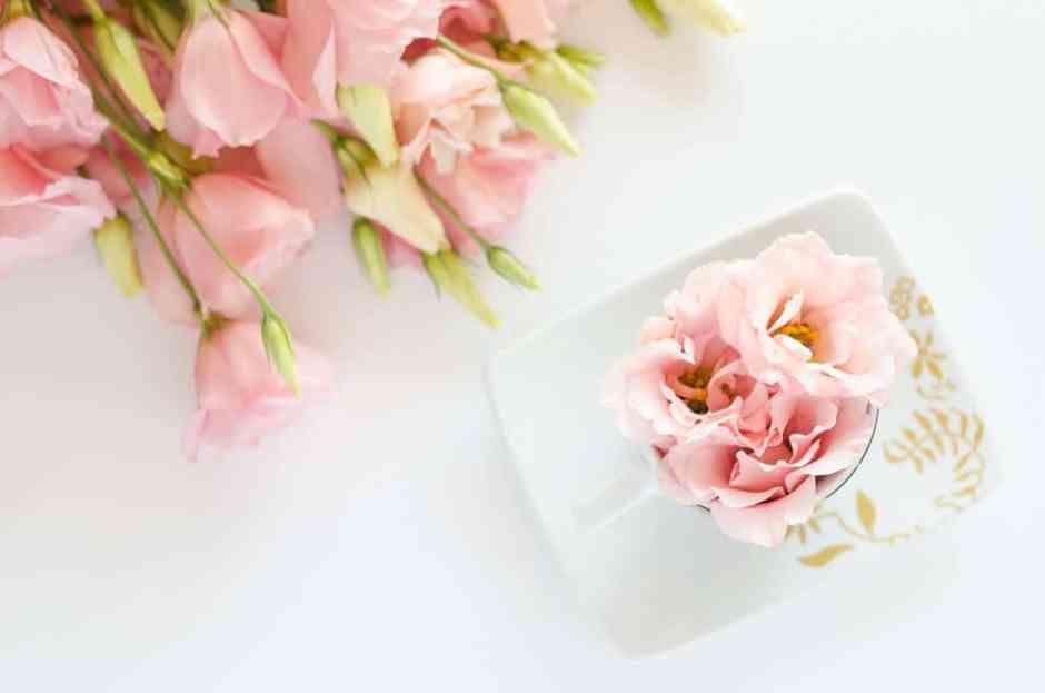 account Instagram a tema piante e fiori da seguire