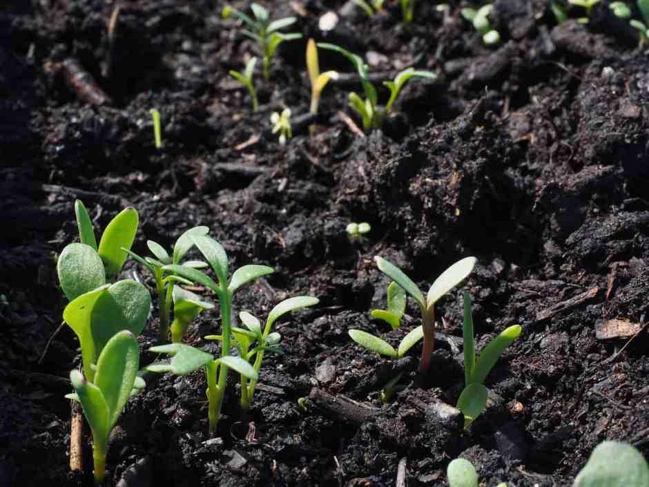 le piante hanno bisogno del giusto spazio per crescere e per sviluppare al meglio le loro radici
