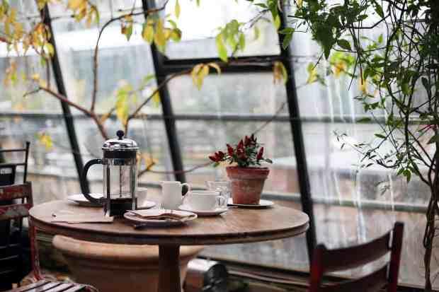 piante indoor