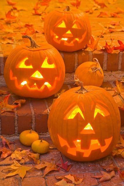 Zucche intagliate per la festa di Halloween