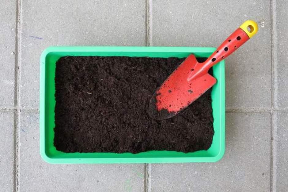 coltivare nei contenitori