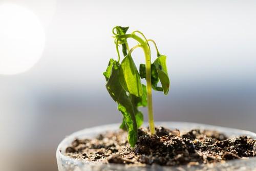 Dalla troppa acqua al non dare abbastanza spazio alle piante, queste cattive abitudini possono seriamente mettere a rischio la salute del nostro splendido giardino, dei nostri fiori e delle nostre piante