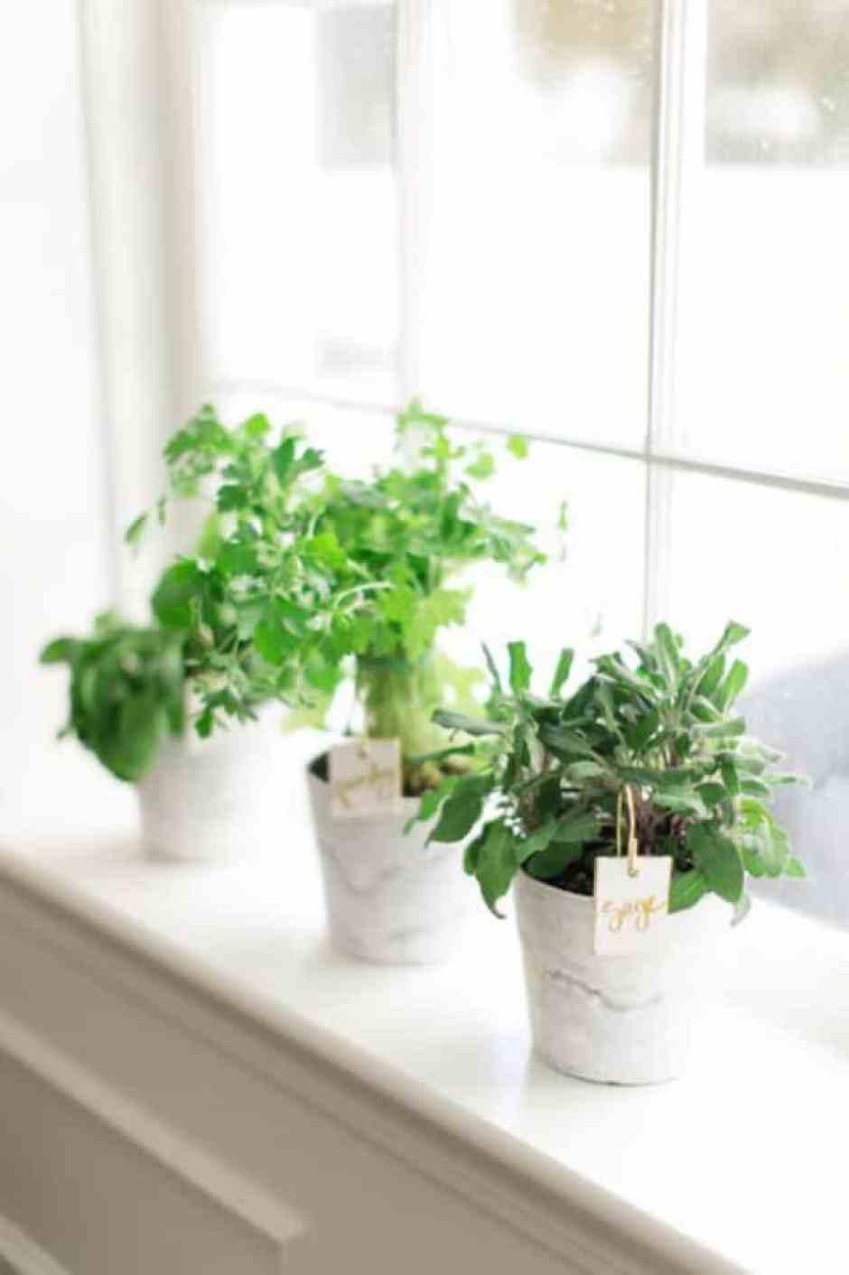 Vasi di erbe aromatiche