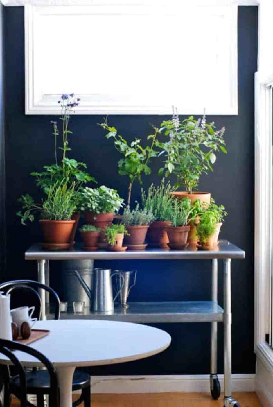 Stand di piante dentro casa