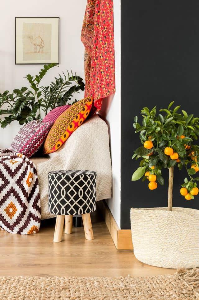 10 piante d'appartamento perfette per arredare la casa