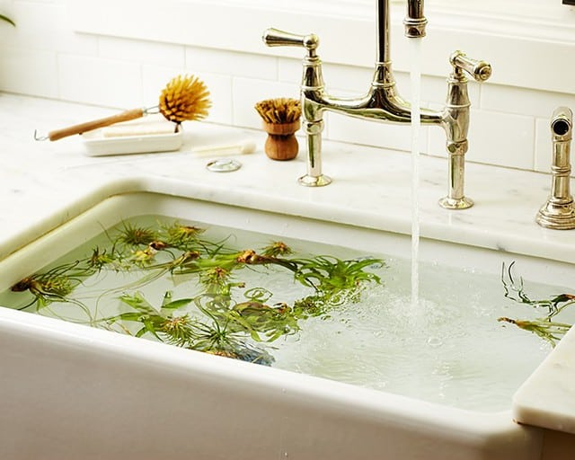Uno dei modi per pulire le foglie dalle piante dalla polvere è immergere le piante nell'acqua