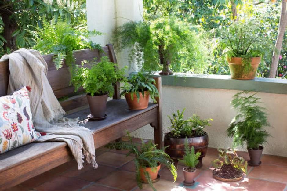 Vasi di piante sul terrazzo di casa