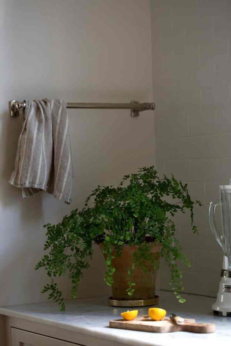 La felce, una pianta resistente all'umidità perfetta per il bagno