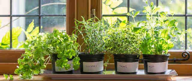 Un giardino di erbe aromatiche davanti alla finestra: un'idea perfetta per chi non ha il giardino.