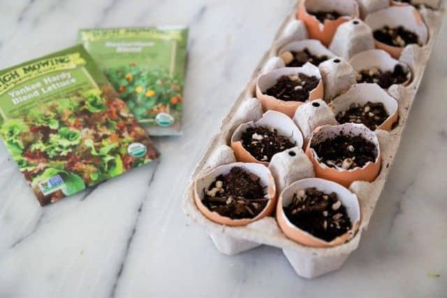 Gusci di uova trasformati in contenitori per le sementi.