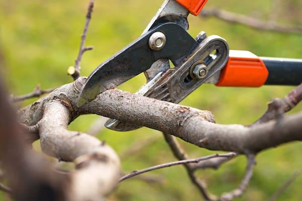 Gli strumenti giusti per potare gli alberi sono indispensabili per fare un buon lavoro