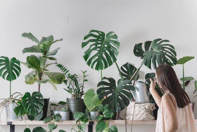 Prendersi cura delle piante d'appartamento dopo l'inverno
