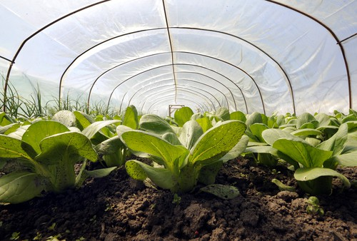 Come costruire una serra fai da te per il giardino in plastica