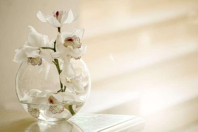 Orchidea bianca, una specie particolarmente adatta all'idrocoltura