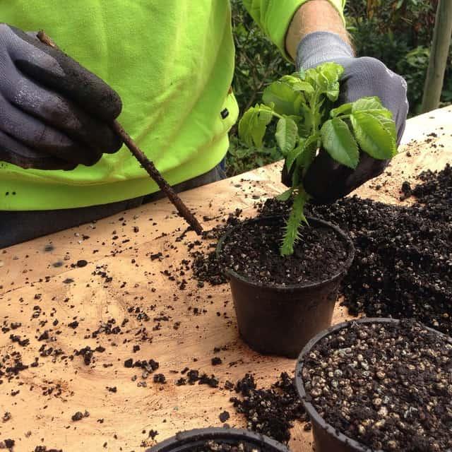 Le tecniche di riproduzione delle piante permettono di ottenere nuove piante e fiori da mettere a dimora in giardino o dentro il vaso a partire da una pianta già esistente.