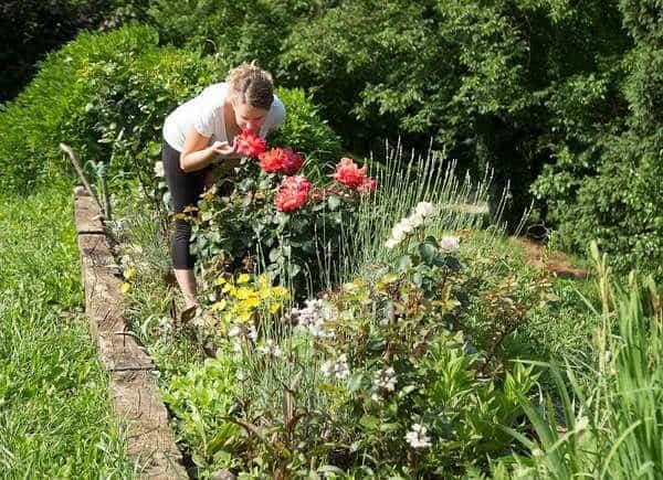 coltivazione di fiori e piante