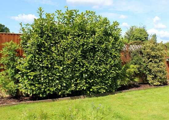 Siepi e bordi in giardino, il modo migliore per recintare lo spazio con tanto verde e avere la giusta privacy