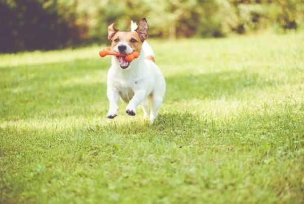 area verde per i cani