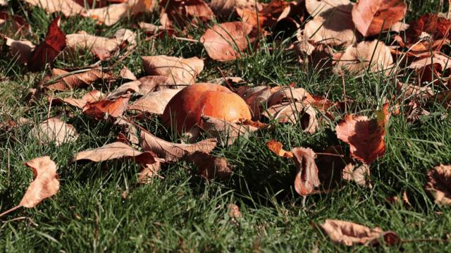 8 motivi per usare il pacciame in autunno