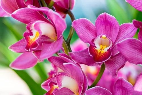 L'orchidea, una pianta perfetta da regalare a Natale.