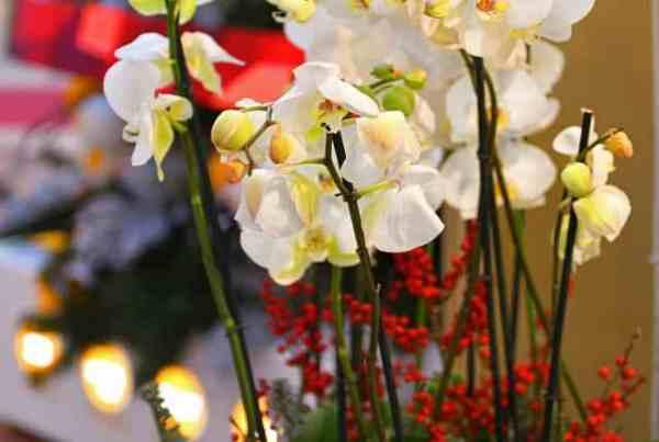 le piante più belle per Natale