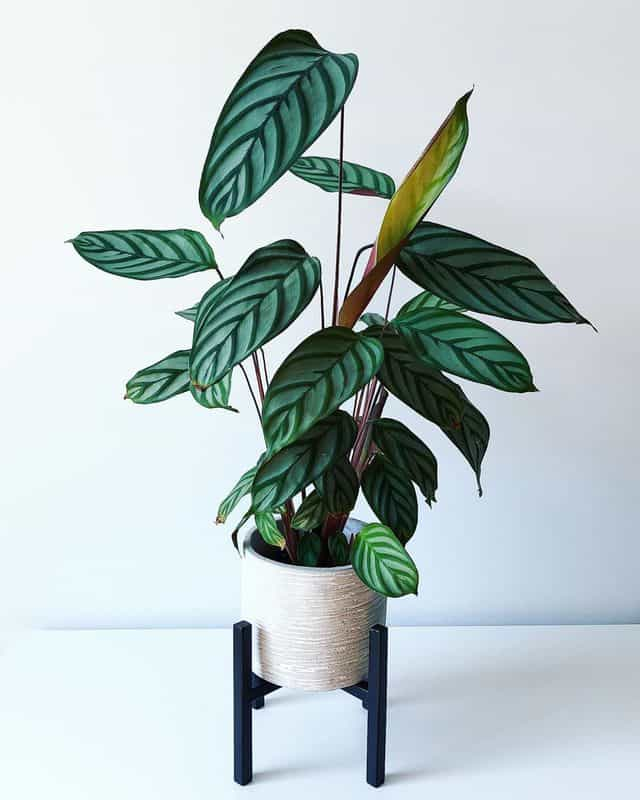 12 piante indoor per principianti