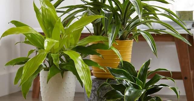 Guida alle piante d'appartamento